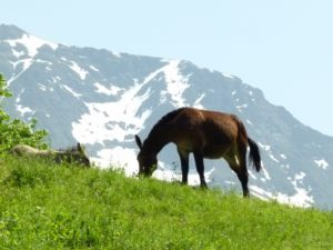 A horse grazes on grass by Domaine de Ramonjuan in the foothills of Pic du Midi